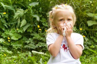夏を乗り切る!免疫力アップに効く食べ物紹介
