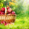 ハッピーマジック白(フルーツジュース味)の成分リンゴポリフェノールの効果等を調べました!